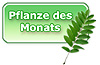 Pflanze des Monats